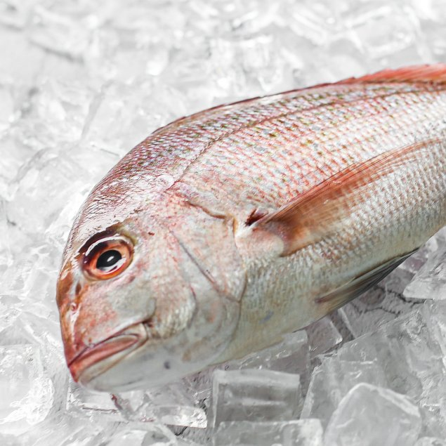 Whole NZ Snapper Small (500-550gram)