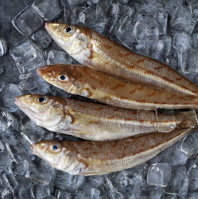 Whole Red Spot Whiting (Eastern School Whiting) 500g
