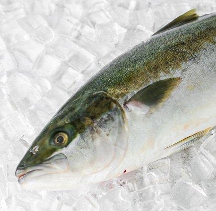 Whole Hiramasa King Fish (4.2-4.5kg)
