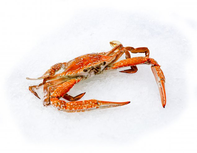 Cooked Blue Swimmer Crab (Min 300g Sold Each)