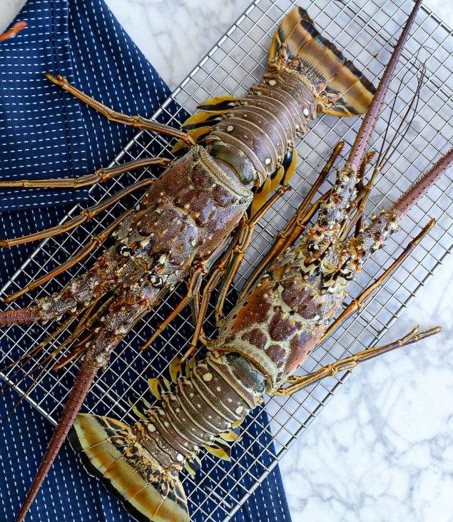 Florida Green Lobster Min. 400g (Frozen)