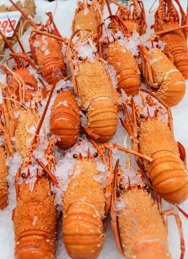 Cooked WA Lobster (Min 350g Each)